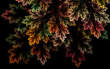 Autumn Valance by tealeaves, Abstract->Fractal gallery