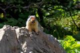 Hey! Hey! Hey! Yeah! You! Hey! by Nikoneer, photography->animals gallery