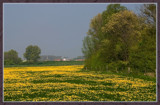 Springtime 17 by corngrowth, Photography->Landscape gallery