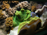 Sea Floor by skyler_7, Photography->Underwater gallery