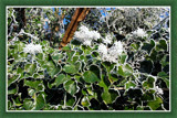 Wintertime 2 (of 4), Ivy by corngrowth, Photography->Nature gallery