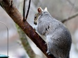 Some Times You Feel Like A Nut by tigger3, photography->animals gallery