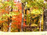 Harvest by jojomercury, Photography->Landscape gallery