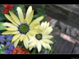 Daytime Drama by Hottrockin, Photography->Flowers gallery