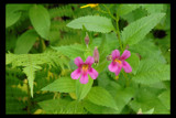 Garden Salad by garrettparkinson, Photography->Flowers gallery