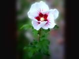 Pinwheel by wheedance, Photography->Flowers gallery