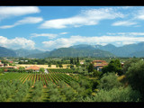 Vineyards and mountains by ppigeon, Photography->Landscape gallery