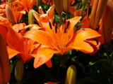 """Orange'd"" You Glad? by Pistos, photography->flowers gallery"