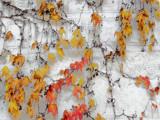 Vine by rvdb, photography->gardens gallery