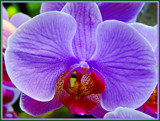 Uber Orchid by trixxie17, photography->flowers gallery