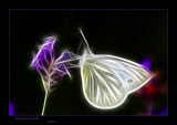 Quantum Butterfly by kodo34, abstract->Surrealism gallery