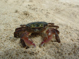 Little Crabby by stoneytreehugger, Photography->Animals gallery