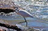 Splish Splash by SR21, Photography->Birds gallery