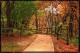 Autumn Trail 2 by Jimbobedsel, photography->landscape gallery