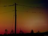 Party Line by jojomercury, photography->birds gallery