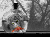Curiosity by Lyzard914, Photography->Manipulation gallery