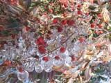 Ice Berries Redux by angelledaemon, Photography->Gardens gallery