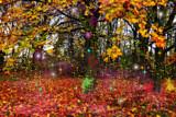Magic Mushrooms by biffobear, photography->manipulation gallery