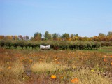 Passing the Pumpkin Patch by kidder, Photography->Landscape gallery