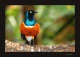 Tropical Birds 6 by Toto_san, Photography->Birds gallery
