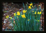 Winter In The Park - Out Of Season by LynEve, photography->flowers gallery