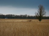 Lonely house, lonely tree by Paul_Gerritsen, Photography->Landscape gallery