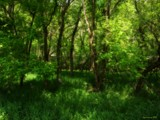 Sea of Green by jojomercury, Photography->Landscape gallery