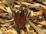 Sunbathing!!! by owldgirl, photography->butterflies gallery