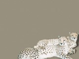 Cheetah - Out of Africa by Crusader, photography->manipulation gallery