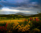 COLOURS OF SUMMER by LANJOCKEY, Photography->Landscape gallery