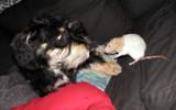 The secret plans by Zeniac, photography->pets gallery