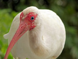 May I Help You? by CanoeGuru, Photography->Birds gallery