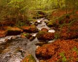 WOODLAND by LANJOCKEY, Photography->Landscape gallery