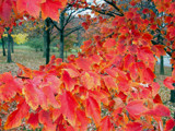 Fall colors by ted3020, Photography->Landscape gallery