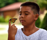 Monarch Release #2 by tigger3, photography->butterflies gallery