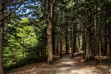Hemlock Trail by Eubeen, photography->landscape gallery