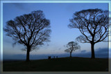 trees in silhouette... by fogz, Photography->Sunset/Rise gallery