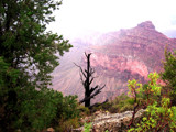 Grand Canyon Fog by sunlitdays, photography->landscape gallery