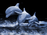 Dolphins by LANJOCKEY, Photography->Manipulation gallery