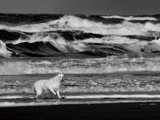 Wave shepard by Paul_Gerritsen, Photography->Animals gallery