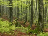 Rainforest 4 by ppigeon, Photography->Landscape gallery