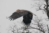 Take off by jeenie11, photography->birds gallery