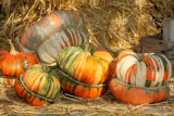 Turk's turban squash by Paul_Gerritsen, Photography->Still life gallery