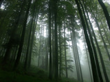 Low-angle view in the forest by ppigeon, Photography->Landscape gallery