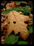autumn love. by screamo, Photography->Nature gallery