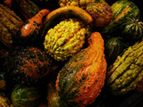 The Gourd, The Bad and the... by phasmid, Photography->Still life gallery