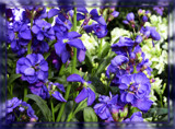 Friday Stock by trixxie17, photography->flowers gallery