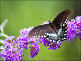 A Butterfly by cynlee, photography->butterflies gallery