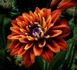 Fall Portrait by trixxie17, photography->flowers gallery