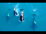 Killer Whales by aclockwork, Photography->Animals gallery